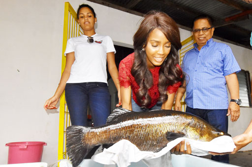 ANGOLAN BEAUTIES FOR FISHERIES