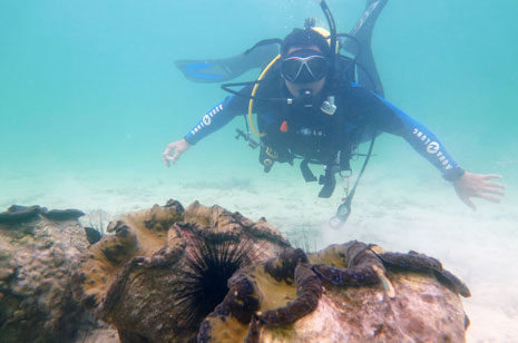 Bolinao declared 'Giant Clam Capital of the Philippines'